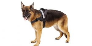 Best Dog Harnesses in 2019 Reviews
