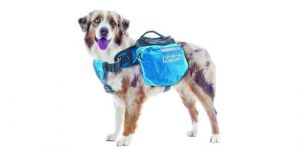 Best Dog Backpacks in 2018 Reviews