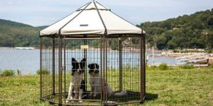 Top 10 Best Outdoor Dog Kennels in 2019 Reviews