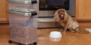 Top 10 Best Pet Food Containers in 2020 Reviews